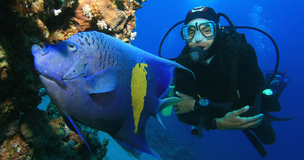 Scuba diver and angelfish