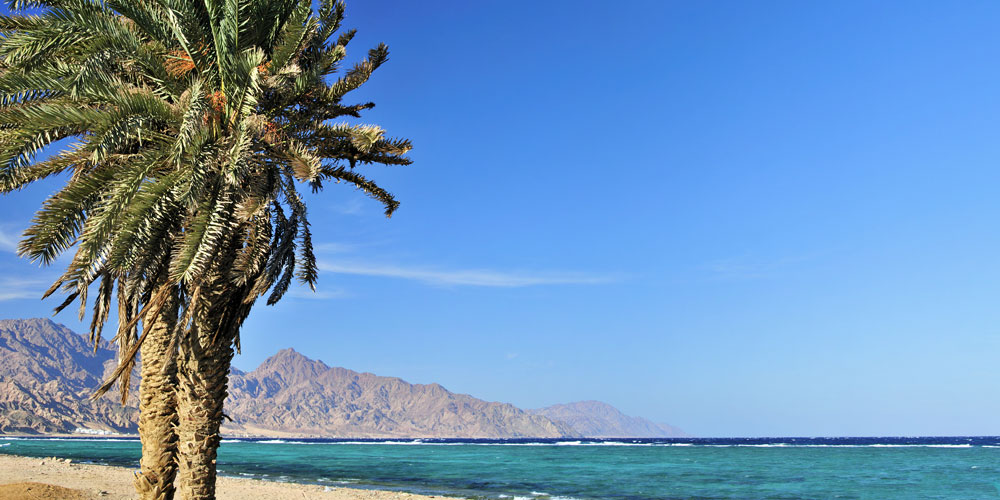 Dahab, palm tree and seaview